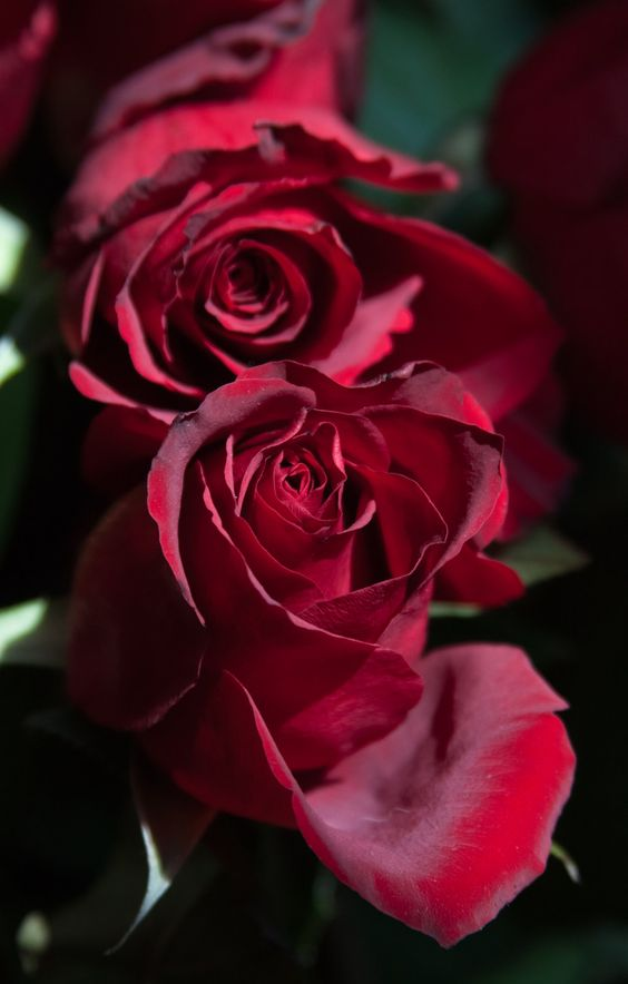 Приворот на розу и сандал