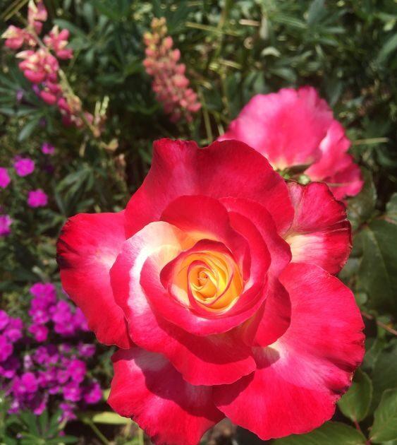 Приворот на розу пачули гуммиарабик